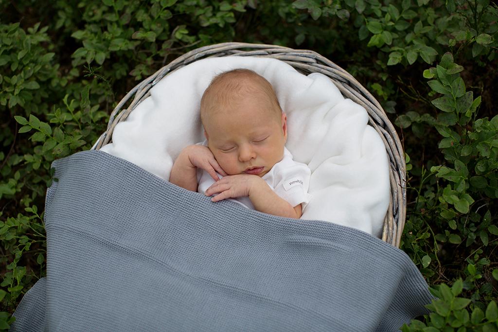 Nyföddfotografering bland blåbärsris